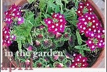 In the Garden: April