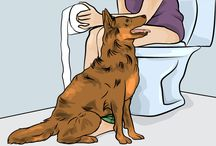 Why Dogs Follow You Into The Bathroom
