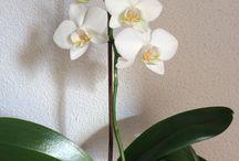 Mis flores / Cosas con flores y otros