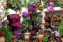 Сады и садики