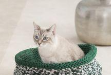 Knitting for cat