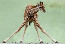Animals: Baby