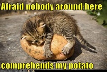 Never met a potato I didn't like