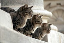 Cute cats and friends / All about cute cats and another cute animals that I love / by Susi Anggraini