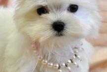 Too Cute! / by Brenda Birk