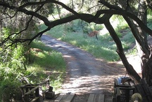 Topanga Canyon / Uncle used to live next door to Mick Fleetwood in Topanga...so beautiful there! / by Lucy Diamond 🐾
