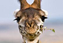 Animals: Africa