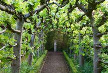 Inspiring: Kitchen Garden