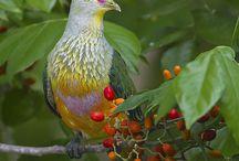 Porumbei salbatici