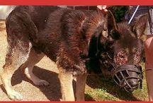 AGAINST ANIMAL ABUSE