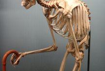 Анатомия (человек)