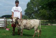 Progetto mucca