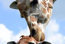 Animali / tutti gli animali spettacolari che riesco a trovare sul web o nella realtà. Sia per la loro bellezza, sia per ciò che rappresentano.
