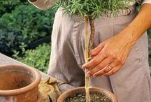 Jardinería en macetas