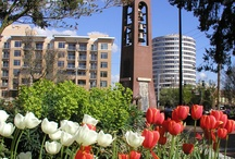 Viva Vancouver / The city of Vancouver, Washington sits just across the river from hipster Portland. Meg likes to escape to visit her gam and explore the quaint, historic city.
