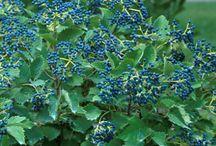 Plants for New Back Garden