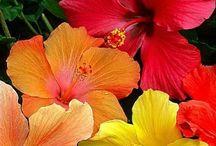 Gyógynövények / UKKO Teákhoz használt kedvenc gyógynövényeink.