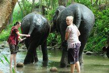 Patara Elephant Camp / One of the best Chiang Mai Elephant training Camp.