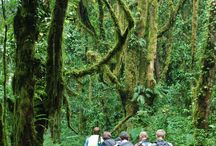 Kilimanjaro forest / Photos of Kilimanjaro's forest zone, taken during the research and writing of the bestselling guidebook on the mountain.