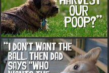Dyr og kjæledyr