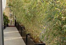 haie bambou pot