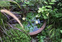 水のある庭