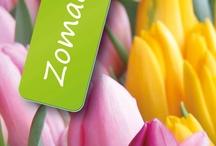 Tulips / Media Vormgeven MV2