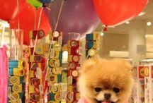 Hund i legetøjsbutik