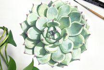 Ботаникана