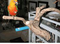 Bird Ideas