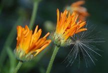 Flora / O roślinkach