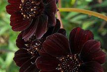 flowering v,b,t