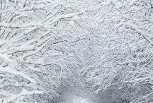 Snow!!! / Snow... Winter and fabulous landscape..