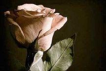 Kwiaty, natura