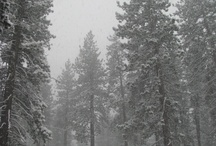 Snow and nature / by Sachin Agarwal