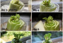 Grow veggies