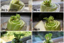 napady zeleninka.