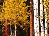Photography in the Aspens Workshop with Rick Schafer