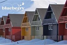 Svalbard con Blueberry