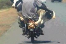 only in SA!