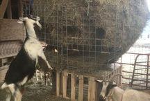 Nezinscot Farm