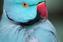 Pet Bird Articles from Pet Care Corner / by PetSolutions Pet Supplies