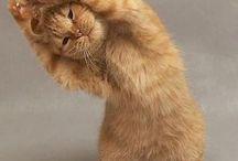Cat streeeetch