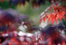 prune weeping teees