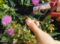 Gardening / by Sharon Day-Waterston