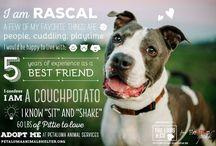 Dog & Puppy adoption ideas