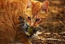 Pobieranie pokarmu i zachowania łowieckie u kotów