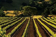 Wineries / Wineries of the world.