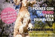 Revista para perros Divine Chien / Todos los números de la revista Divine Chien