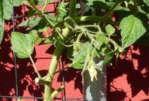 Obst pflanzen